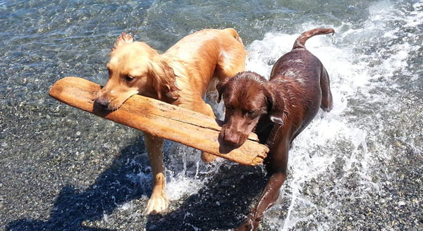 two-dogs-one-stick-co-authoring-a-book